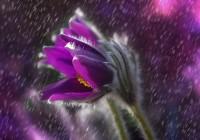 Названия дождей по-японски