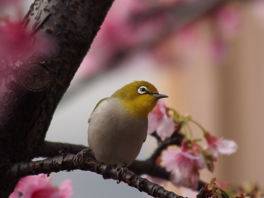 О том, как писать сочинения по-японски