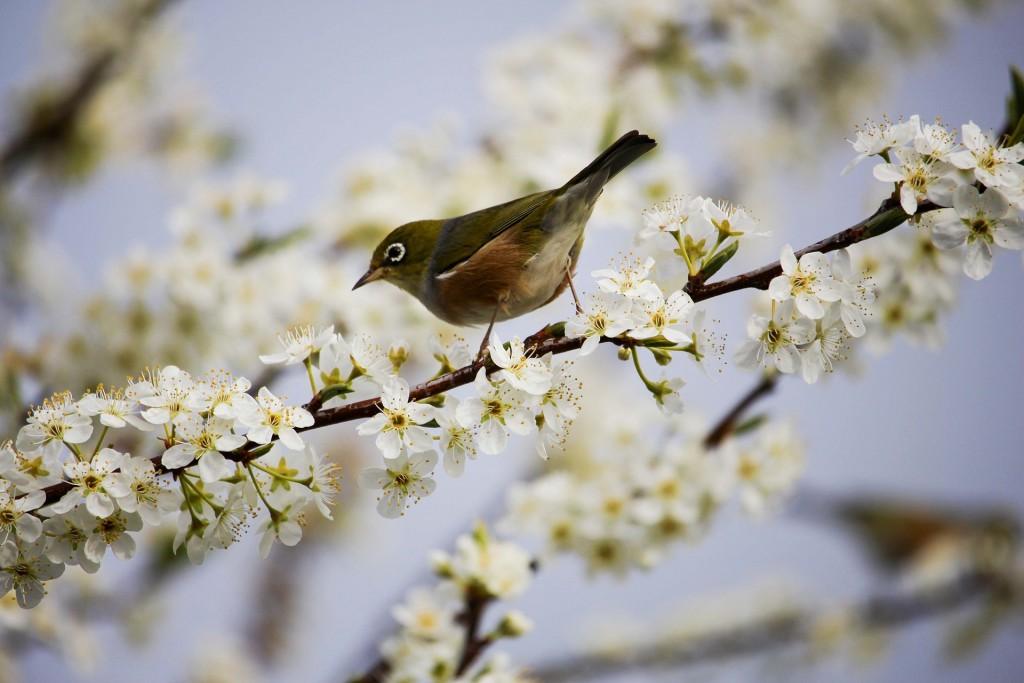 Японские выражения о весне
