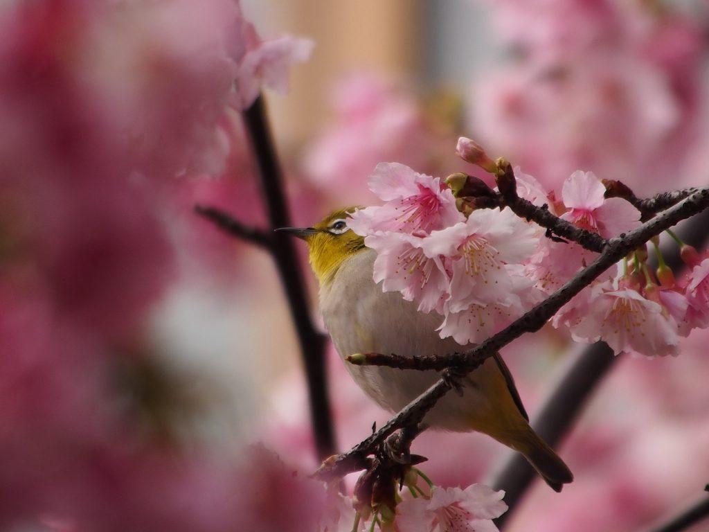 Словообразование по-японски. Новая подборка