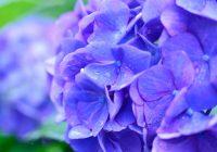 Большая подборка названий летних дождей в японском языке