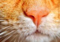 Японские идиоматические выражения со словом нос 鼻