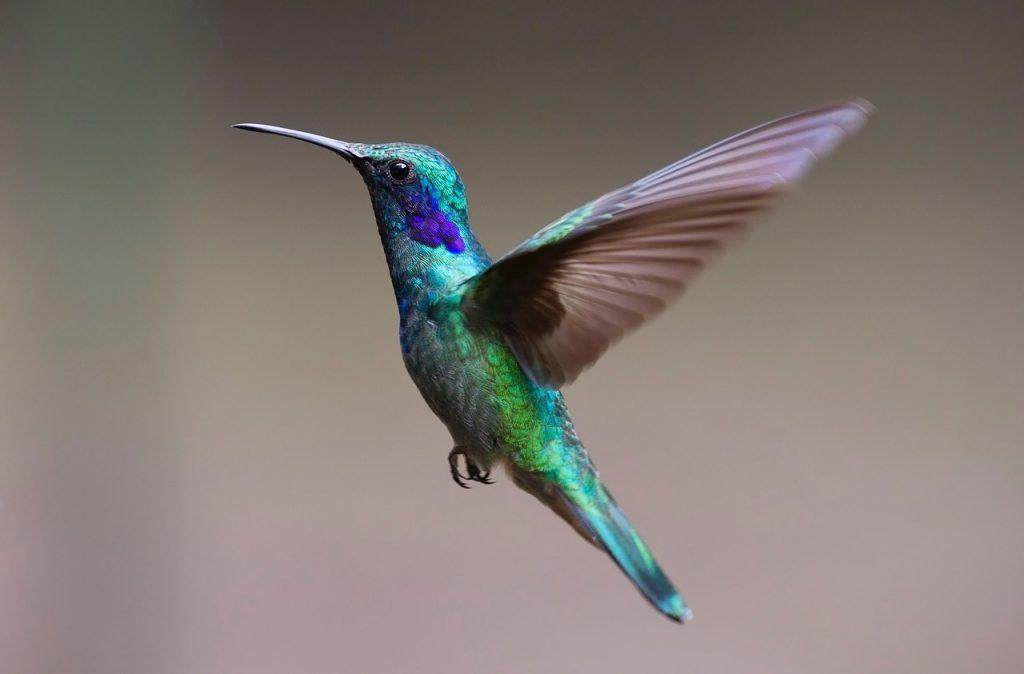 """Разница понятий """"крылья"""": 「羽」 и 「翼 」"""