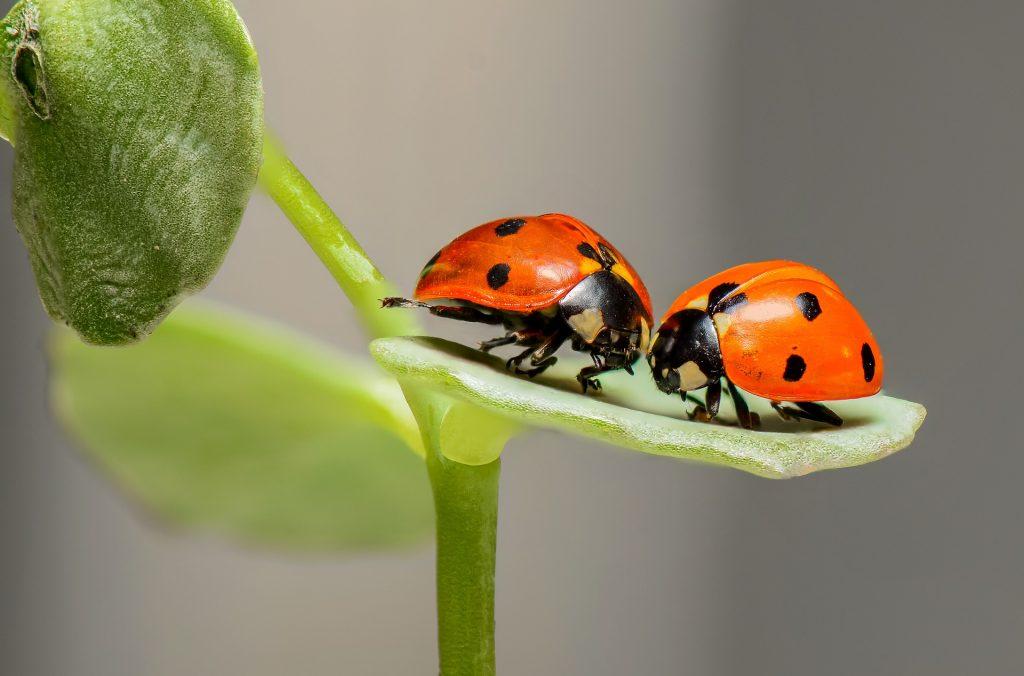 """Японские идиомы, в которых фигурируют """"жуки"""" 虫"""