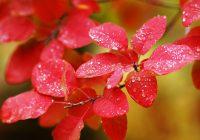 Подборка названий осенних дождей на японском языке. Осенние дожди по-японски