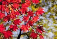 Понятия японского, связанные с природой и погодой, выраженные одним словом, но разными типами чтения